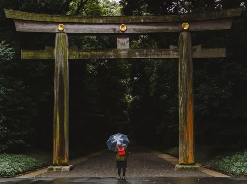 Japón, cerezos, primavera, sakura